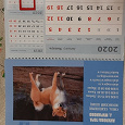 Отдается в дар Календарь на 2020 год новый с собаками