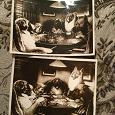 Отдается в дар Фотооткрытки с собаками