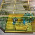 Отдается в дар Небольшая клетка, еда и опилки для крыски и хомяка