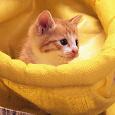Отдается в дар Котик вещевой детский