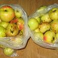 Отдается в дар Яблоки дачные