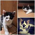 Отдается в дар Котята, три месяца — все три кота