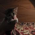 Отдается в дар Самые лучшие котята