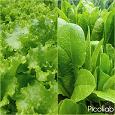 Отдается в дар Угощу салатом на ОВ