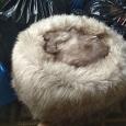 Отдается в дар Меховые шапки, натуралка,56