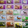Отдается в дар почтовые марки с собаками (часть 2)
