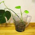 Отдается в дар отростки растений