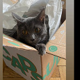 Отдается в дар Капсулы — (не)котики в мешке (одежда)