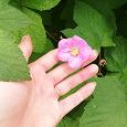 Отдается в дар Декоративное растение