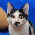 Отдается в дар красавец котик в дар