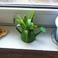Отдается в дар Растения