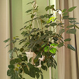 Отдается в дар Черенки комнатных растений