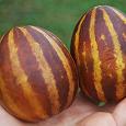 Отдается в дар Семена дыни ананасовой