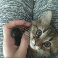 Отдается в дар Котята ищут дом