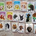 Отдается в дар почтовые марки с собаками (часть 1)