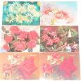 Отдается в дар Открытки — цветы