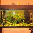 Отдается в дар Рыбки для аквариум