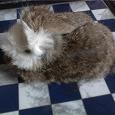 Отдается в дар Мягкая игрушка: кролик из кролика