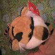 Отдается в дар очаровательный тигренок