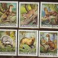 Отдается в дар Марки--Венгрия 1979г. — Фауна--полная серия «Пушные звери»
