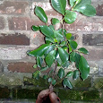 Отдается в дар Комнатные растения в любящие руки