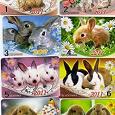 Отдается в дар Кролики — это не только ценный мех, но и мечта коллекционера… опять календарики