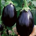 Отдается в дар Семена баклажан