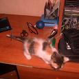Отдается в дар котенок