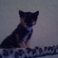 Отдается в дар котёнок-найдёныш