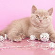Отдается в дар Кот в мешке бижу
