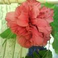 Отдается в дар Черенки китайской розы