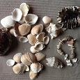 Отдается в дар Ракушки с моря для поделок и сувениров