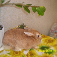 Отдается в дар Пушистый кролик