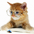 Отдается в дар Очки — кот в мешке
