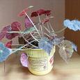 Отдается в дар Растение «Бегония Буропятнистая»