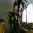 Отдается в дар искусственная пальма