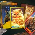 Отдается в дар Фотки котов