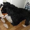 Отдается в дар Большая собака
