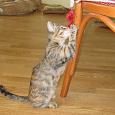 Отдается в дар Подарю ласковую кошечку вместе с приданным! Готова помочь материально кормить ее, если люди хорошие!