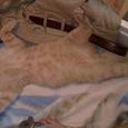 Отдается в дар Киндер-игро-кот: Киндеры и не только