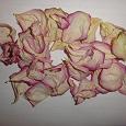 Отдается в дар Засушенные лепестки роз.
