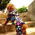 Отдается в дар Комбинезон для средней собаки