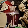 Отдается в дар Скелет деревянный