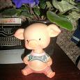 Отдается в дар свин