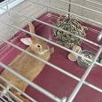 Отдается в дар Клетка с кроликом