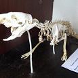 Отдается в дар Учебные материалы — студентам ветеринарам /зоотехникам /медикам /биологам/экологам
