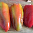 Отдается в дар Семена болгарского перца