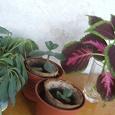Отдается в дар Детки растений…