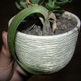 Отдается в дар Растение