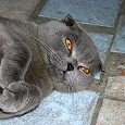Отдается в дар Живая домашняя кошка
